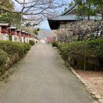 常宮神社の梅(敦賀市)