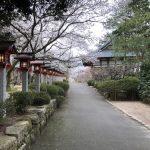 常宮神社の桜2018(敦賀市)